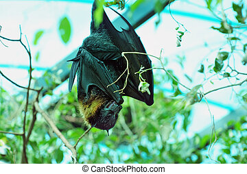 Jerusalem Biblical Zoo - Egyptian fruit bat on a tree in...