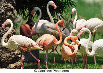 Jerusalem Biblical Zoo - Flamingos or flamingoes in...