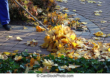 Man raking leaves in the garden