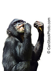 Silhouette of a Chimpanzee Monkey - Chimpanzee in Jerusalem...