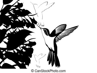 Hummingbirds around flowers. Black and white illustration.