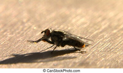 Fly on wood - This is a macro close-up shot of a north...