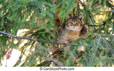 Wildcat - Photo shot in the Bavarian Forest
