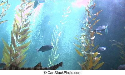 Giant Fishtank - This is a giant fish tank with sharks and...