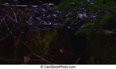 salamander night - This is a dolly shot of the forest floor...
