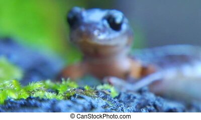 salamander cu rack - This is an extreme close up shot of an...