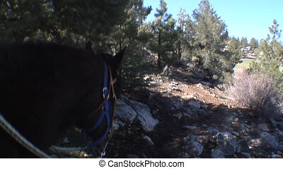 Horseback POV Forest - This is a Point of View shot from the...