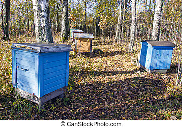 Colored hive stand between birch trees in autumn.