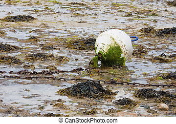 Buoy covered with algal growth at ebb tide, bretagne, france