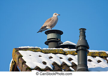 Seagull in wintertime, sitting on top of a chimney