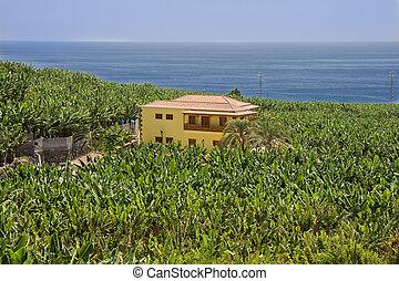 House surrounded by banana plantations at La Palma