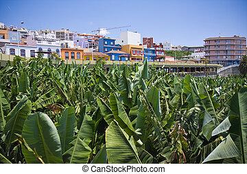 Village near big banana plantation at La Palma