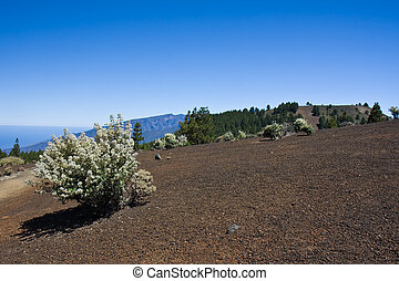 Desolate landscape at La Palma, Spain - Desolate volcanic...