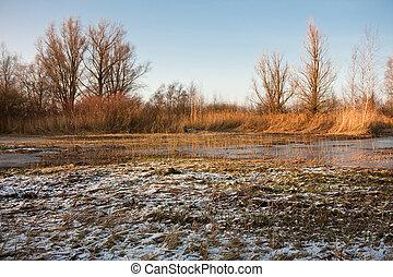 Frozen swamp in the Netherlands