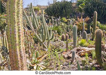 Cactus garden at La Palma, Spain