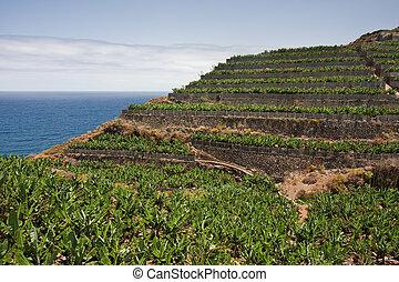Banana plantations at the coast of La Palma, Canary Islands