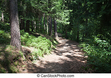 Sunny trail in a big forrest