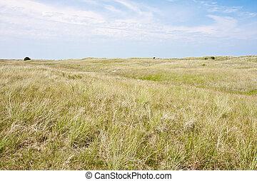 Dune landscape at the Dutch coast