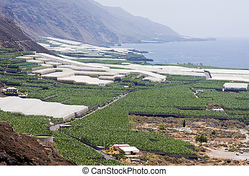 Big banana plantations at La Palma, Canary Islands