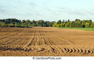 autumn tillage field