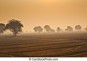 fields with trees in morning fog in India