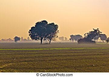 hut of farmer in morning fog