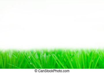 green grass - Fresh spring green grass