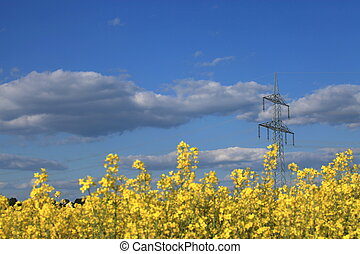 Colza 104 - Colza Field in Germany