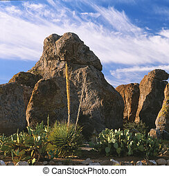City of the Rocks, New Mexico - City of the Rocks State Park...