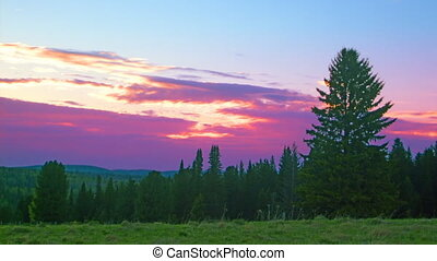 sunset landscape forest and sky