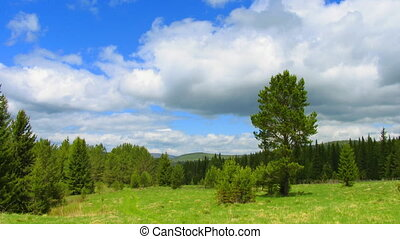 summer landscape forest and clouds on sunny day timelapse