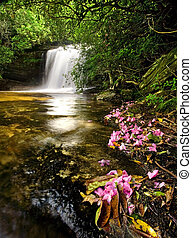 Beautiful waterfall in lush rain forest with pink flowers