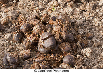 Manure - Horse manure on a farm