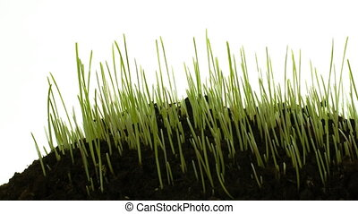 Grass growing, smooth timelapse&pan