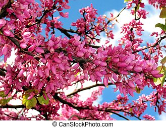 flowering tree - snapshot of a flowering tree in northern...