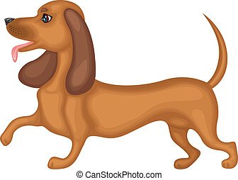 Dachshund dog - Cute brown dog breed dachshund running