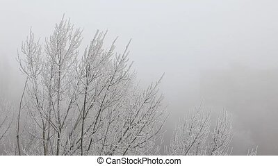 Branches of a tree in the snow, fog