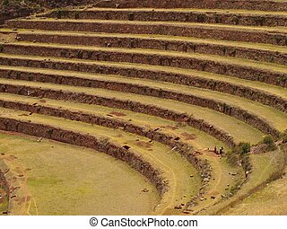 Inca agriculture terraces in Peru - Terraces of Inca town...