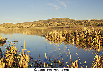 Marshy inlet on Watson lake - a marshy inlet on the edge of...