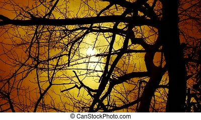 Branches covered sky and...
