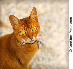 Red cat - Close up portrait of a red cat with yellow green...