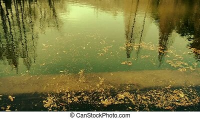 Forest reflection in water,metasequoia leave floating on...