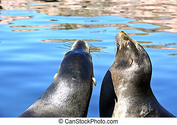 sea lions at the lake