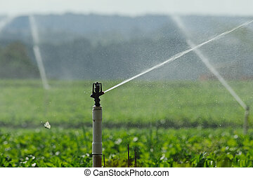 Water sprinkler and butterfly - Close-up to spurt of water...