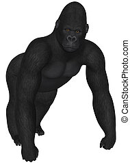 Gorilla - 3D rendered african gorilla on white background...