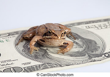 Frog sitting on the dollar banknote depicting concept of...
