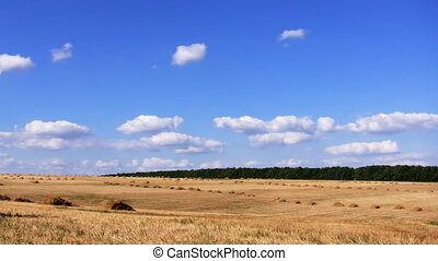 field  - field and blue sky
