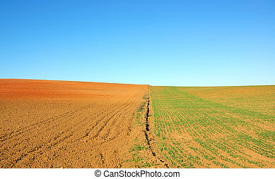 cultivated field  background and blue sky