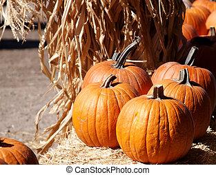 Orange Pumpkins - A group of orange pumpkins