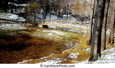 Forest and bridge reflection in water,metasequoia leave...
